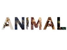 animal-thumb