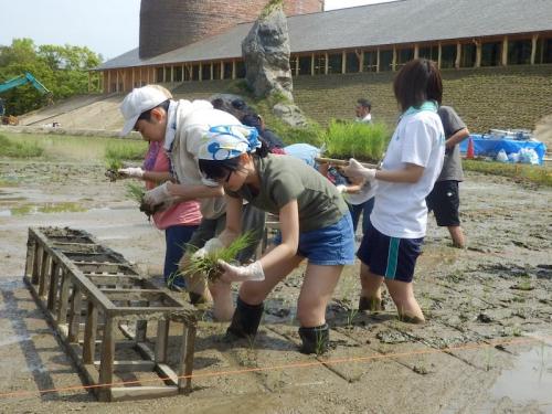 定間隔で植えることできるように、木枠を使って田植えスタート
